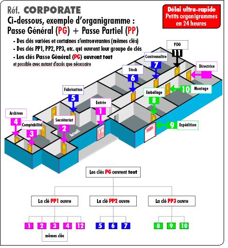 organigramme-pp